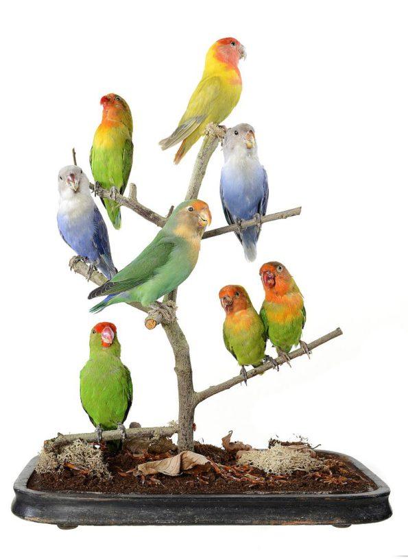"Escultura ""Love Birds"""
